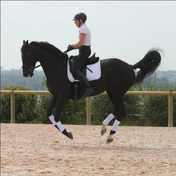 Quelle aide vas-tu utiliser pour faire partir ton cheval au galop à gauche ?