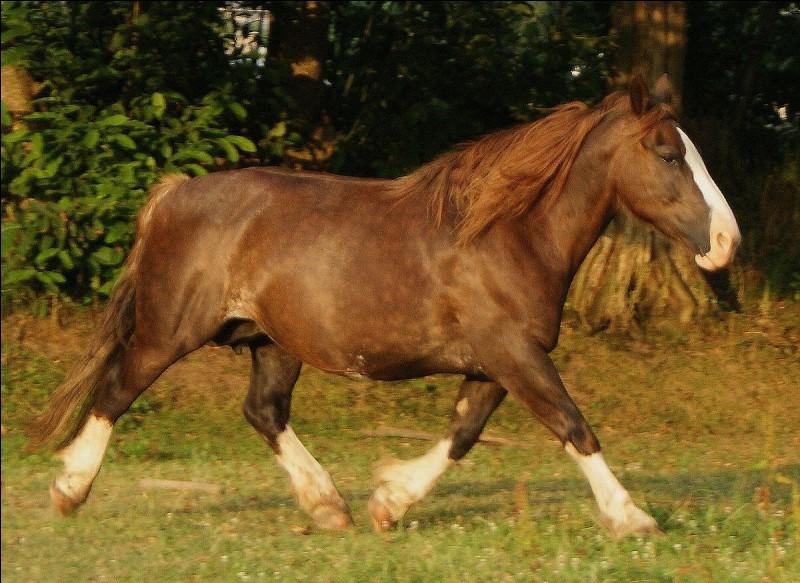 Quelles sont les balzanes qui ne sont pas associées au cheval ?