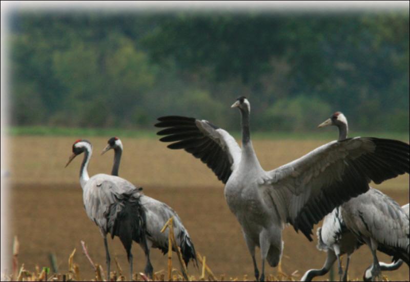 Ces oiseaux sont :