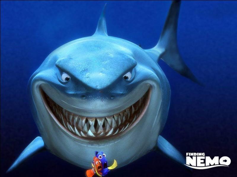 Quizz les requins quiz requins - Quantite de viande par personne par jour ...