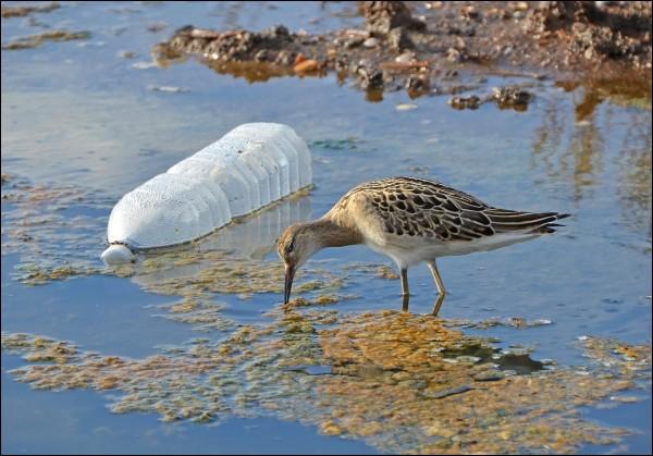 Quel est le temps de dégradation d'une bouteille en plastique ?