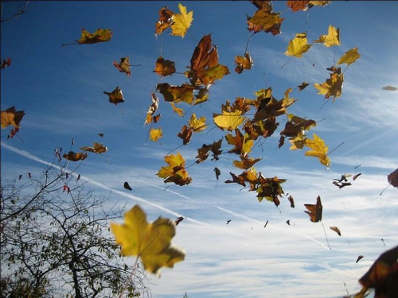 Comment s'appelle le mouvement naturel de l'air ?