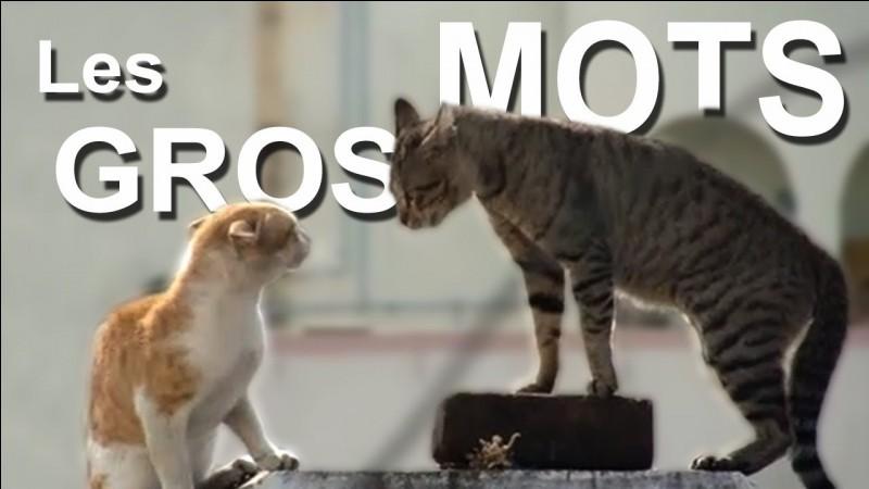 Quelle est l'insulte contenant chat domestique souvent dite à Nuage de Feu ?