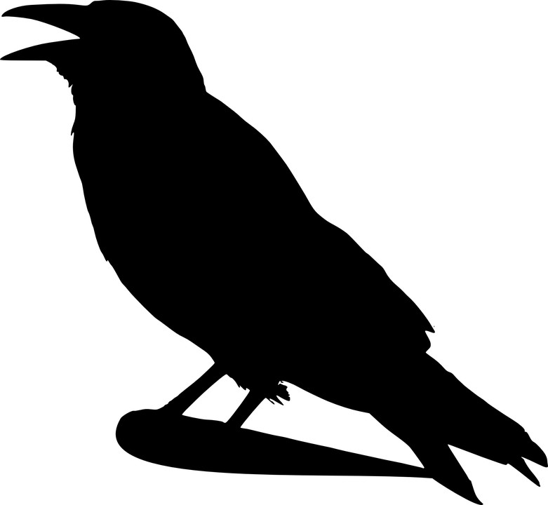 Quel est ton oiseau symbolique ?