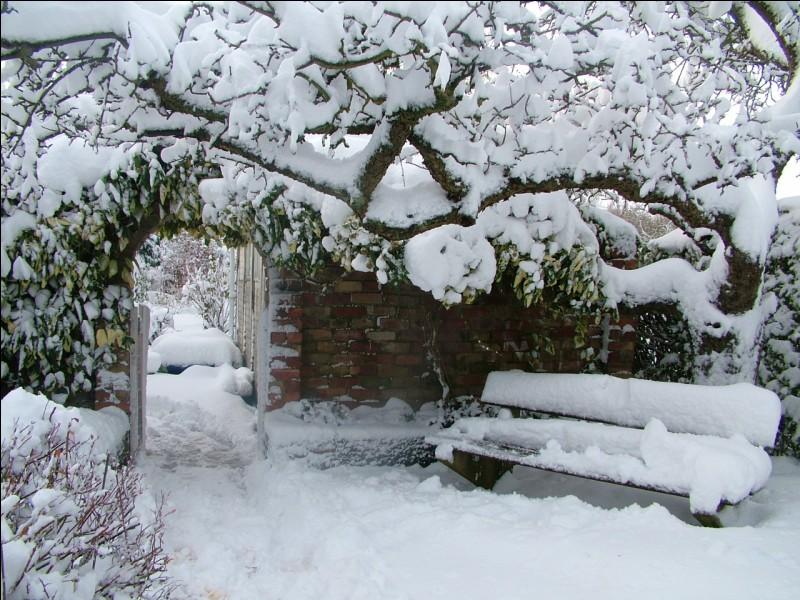 Tu te réveilles, et vois par ta fenêtre que le jardin est couvert de neige, que fais-tu ?