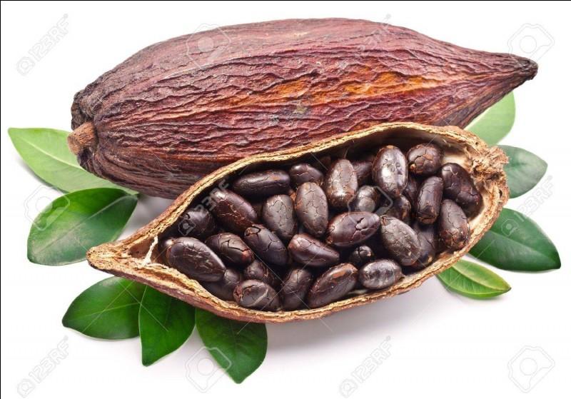 Comment se nomme le fruit du cacaoyer ?