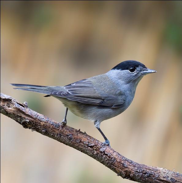 Quel est le nom de ce dernier oiseau ?
