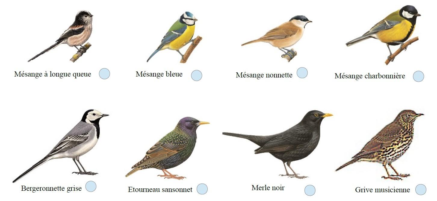 Donne le nom de ces oiseaux