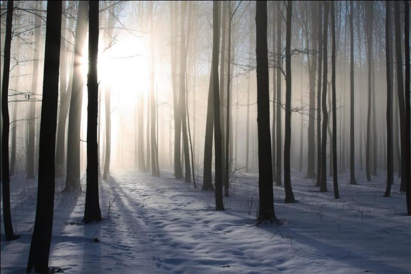 Quel chevalier trouve Perceval dans la forêt ?