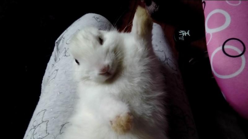 Combien de personnes aiment les lapins dans le monde ?