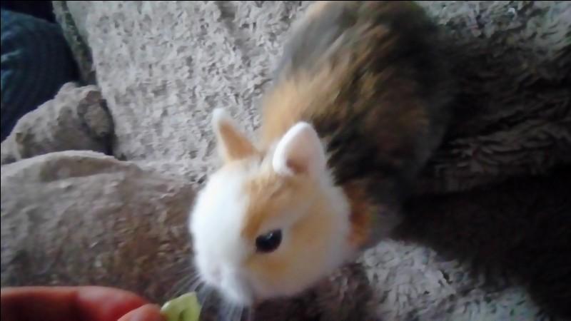 Quel est le régime alimentaire du lapin ?