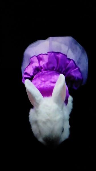Le lapin craint-il le froid ?