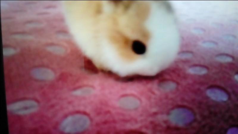 Comment s'appelle un jeune lapin ?