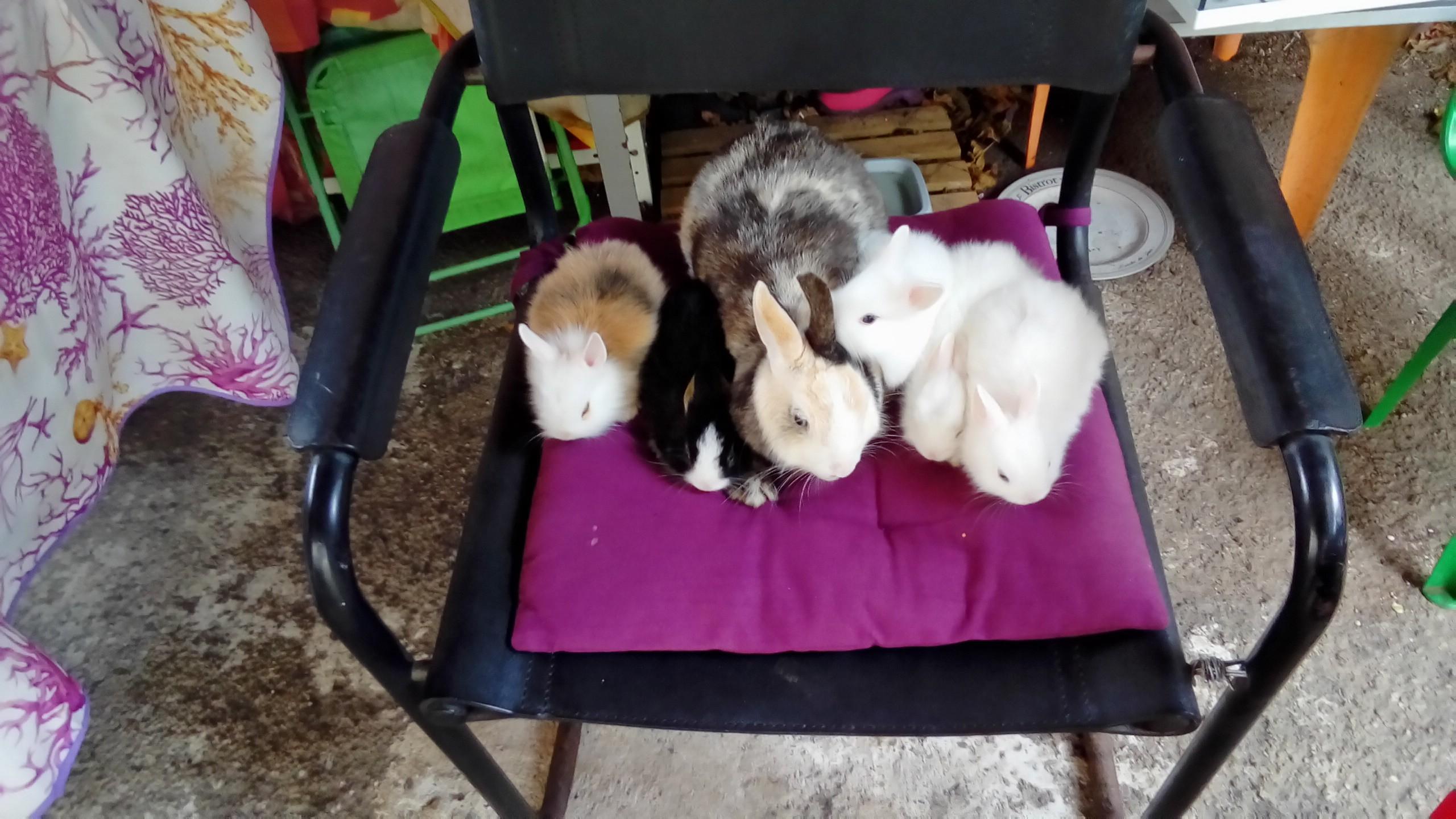 Le lapin et ses petits