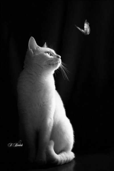 Dans une expression quel animal est blanc en parlant d'un projet couteux et de prestige ?