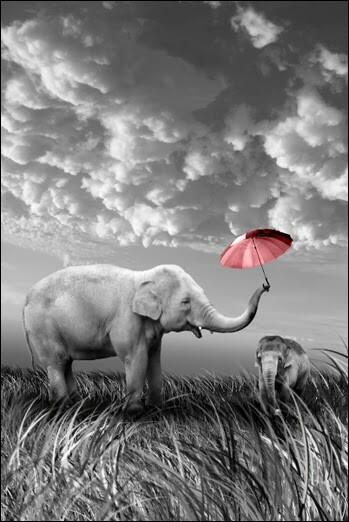 Existe-t-il des éléphants blancs ?