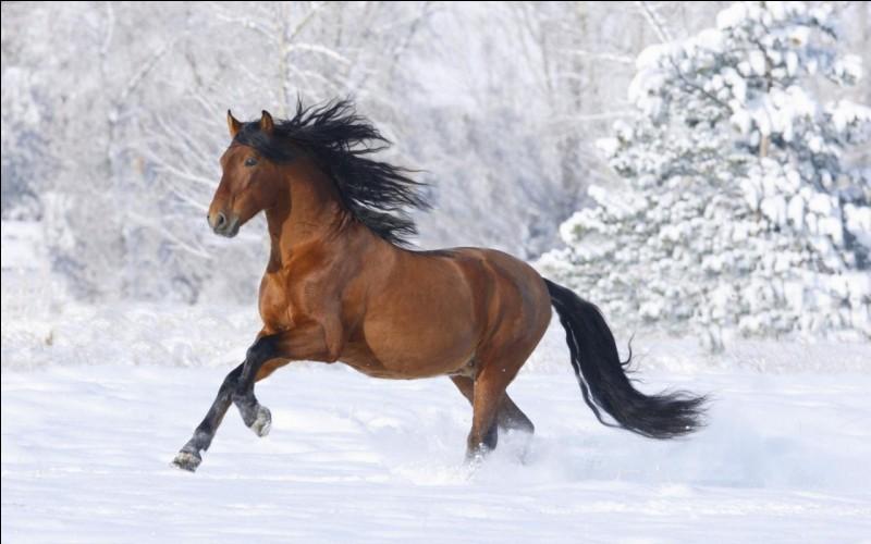 Les robes du cheval et poney