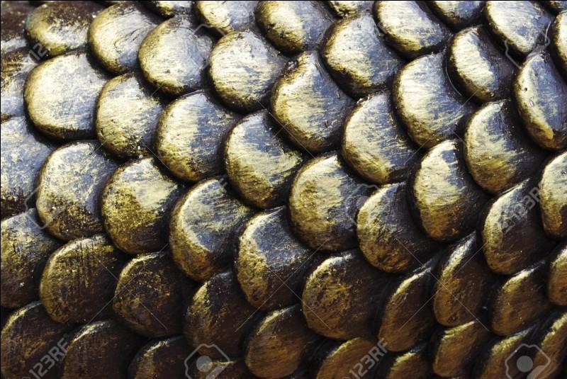 Les écailles, ce sont ces plaques fines et dures, cornées chez les reptiles et osseuses chez les poissons, qui recouvrent leur corps entier, sauf les nageoires des poissons. Mais à quoi servent-elles ?