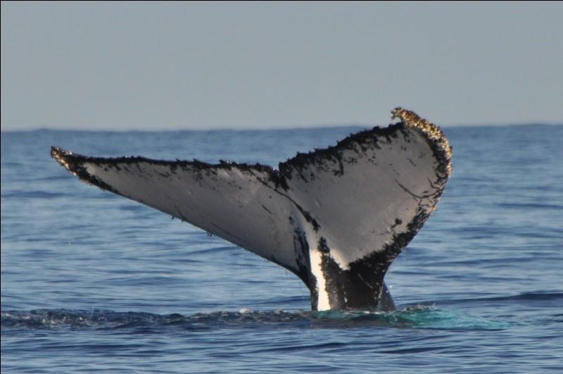 Une nageoire est un membre ou un appendice en général large et plat permettant le mouvement et le soutien dans le milieu aquatique. Chez la plupart des poissons, combien en trouve-t-on ?