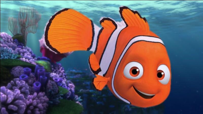 Comment s'appelle ce poisson dans un film très connu sorti en 2003 ?