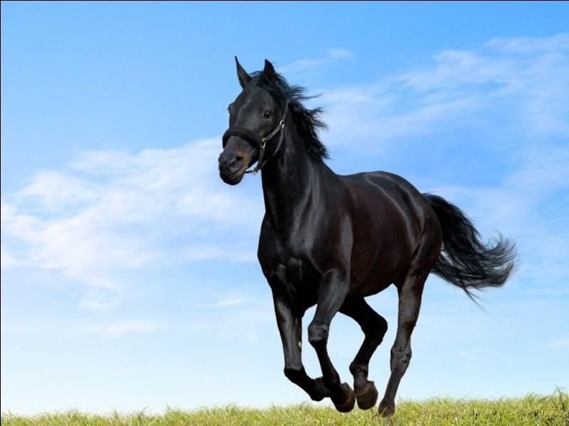 Quelle est la race de cet animal ?