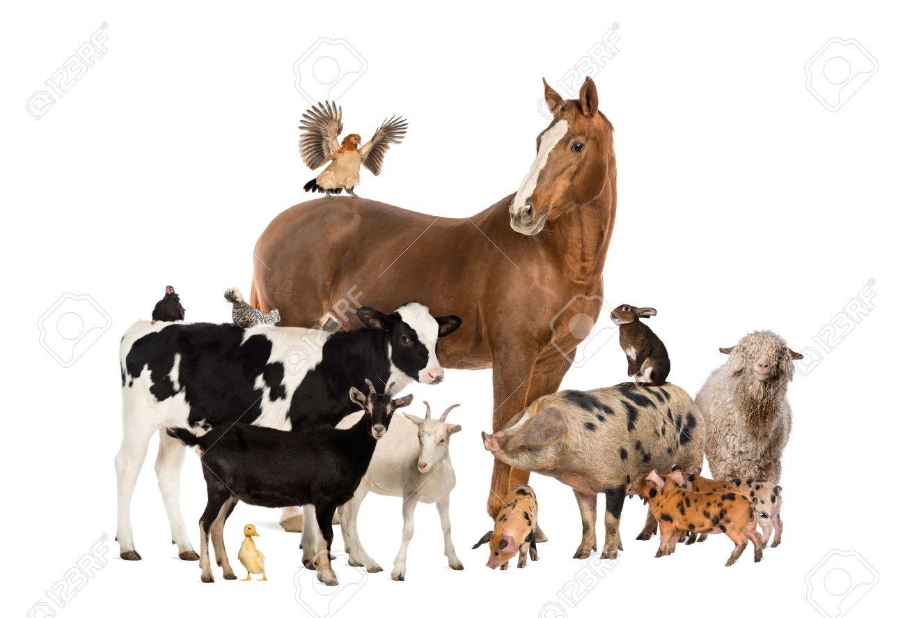 Les races animales