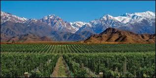 Mendoza est une ville de la région de Cuyo et le cœur de la région viticole de l'/du :