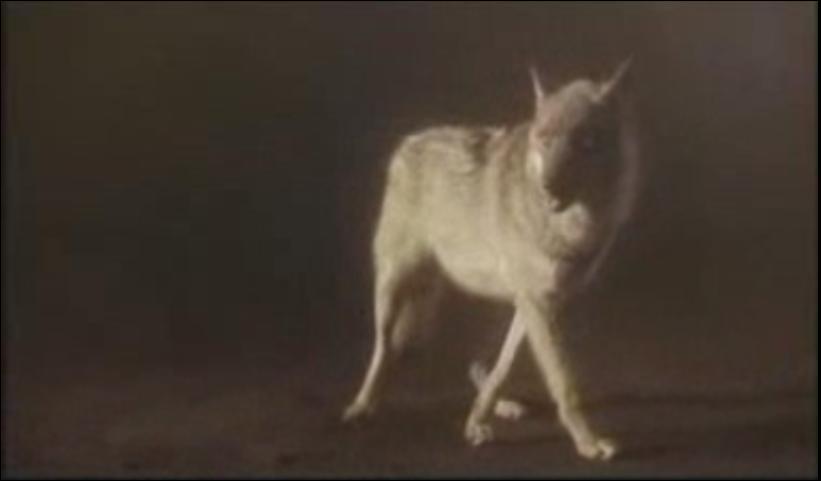 Dans quel clip pouvons-nous voir ce loup ?