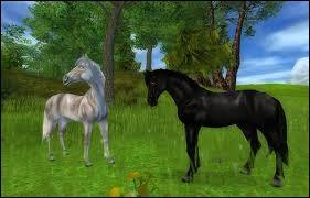 """Ce cheval est """"neutre"""" au niveau des allures et des """"figures"""". C'est le..."""