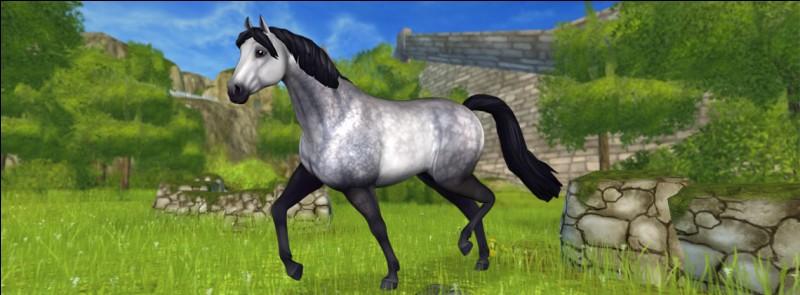 """Ce cheval a été créé par l'équipe de """"Star Stable"""" récemment. C'est le..."""