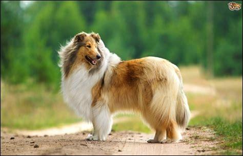 Le chien le plus long du monde est un lévrier irlandais nommé Farrell, il mesure ____ de longueur.