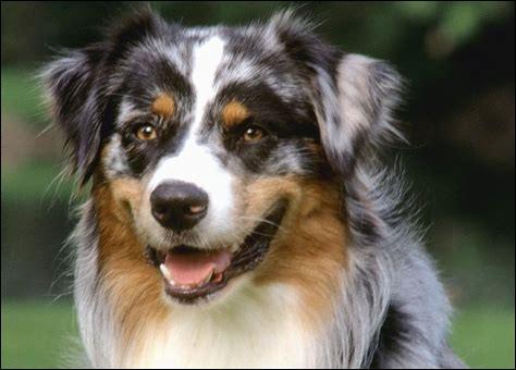 Bluey, un berger australien décédé, ayant résidé en Australie, est le chien qui a vécu le plus longtemps jusqu'à présent.Il a atteint...