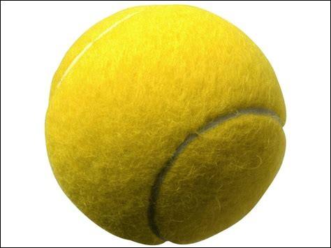 À Dallas, un golden retriever prénommé Auguie, détient le record du plus grand nombre de balles de tennis tenues en même temps dans sa gueule, avec...