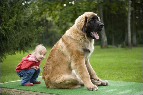 Giant George est le plus grand chien du monde. En effet, c'est un dogue allemand de ____ de hauteur.
