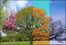 Quelle est ta saison préférée ?