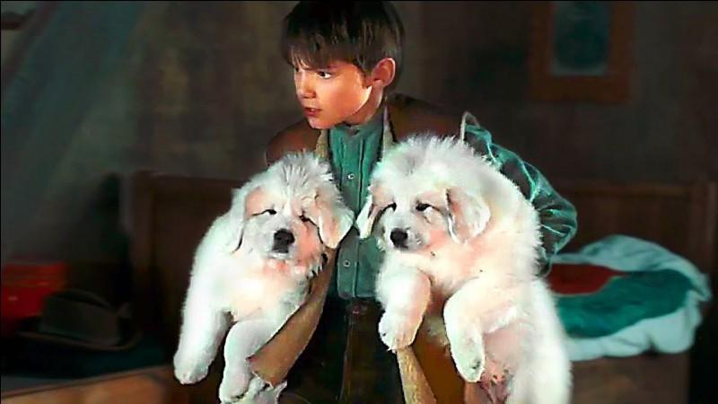 Comment Sébastien appelle-t-il les trois chiots de Belle ?