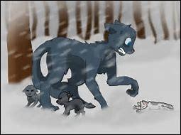 Un des chatons d'Étoile Bleue est mort de froid. Lequel ?