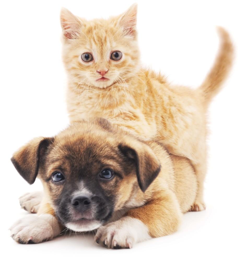 Est-ce le nom d'un chien ou un chat ? - (2)