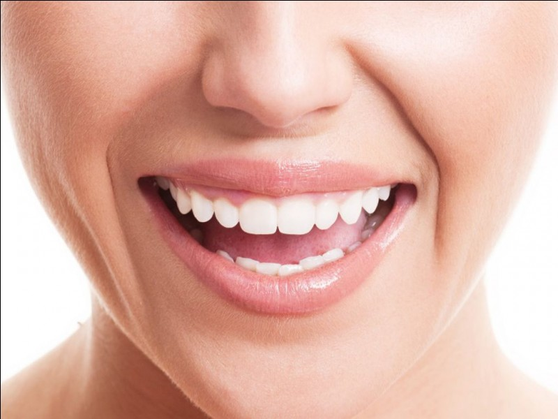 Combien de dents possèdent les dauphins ?