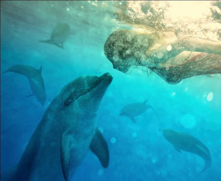 Les dauphins ont-ils des poumons ?