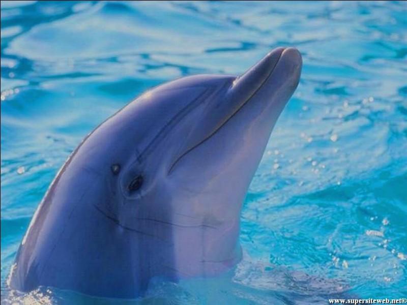 Quels habitants d'un pays consomment du dauphin ?
