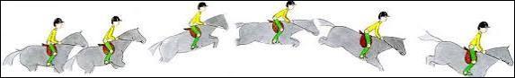 Dans le mécanisme du saut, les étapes sont...