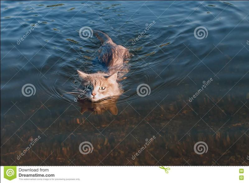 Suite à la découverte de l'inondation Plume Grise inquiet pour Rivière d'Argent décide d'aller voir Rivière d'Argent, Cœur de Feu lui apporte évidemment tout de suite son soutien, et les voila partis. Mais presque arrivé, un événement inattendu va les retarder. Lequel ?