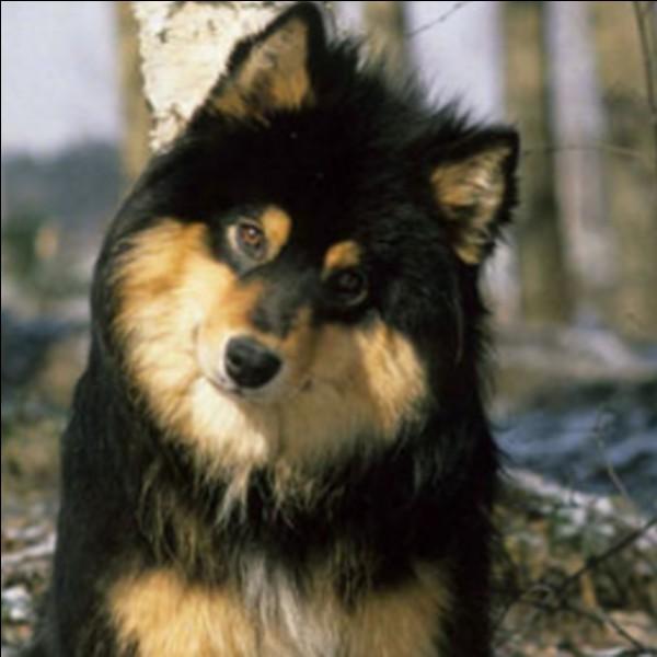 Et nous finirons avec ce chien poilu et magnifique :