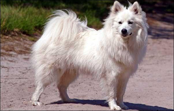 Et en voici un autre, parmi les chiens blancs, quel est son nom ?