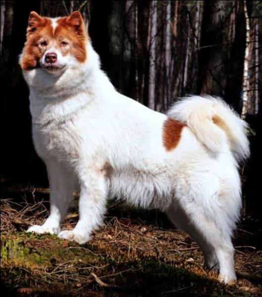 Quel est celui-là, décrit comme un animal loyal courageux et intelligent ?