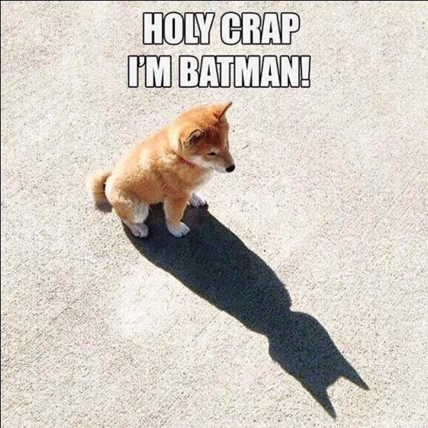 Ce chien se prend pour ...
