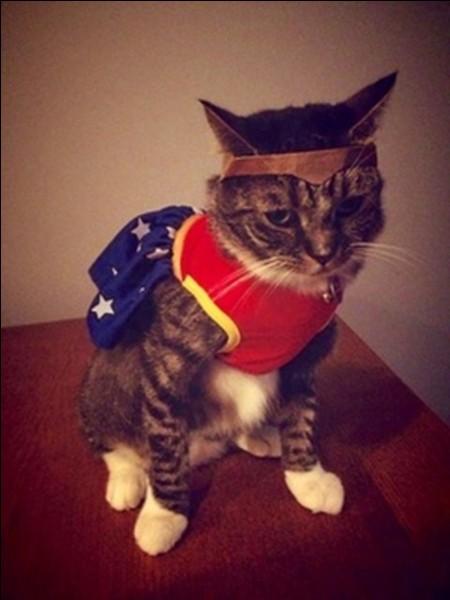 Ce chat semble ...