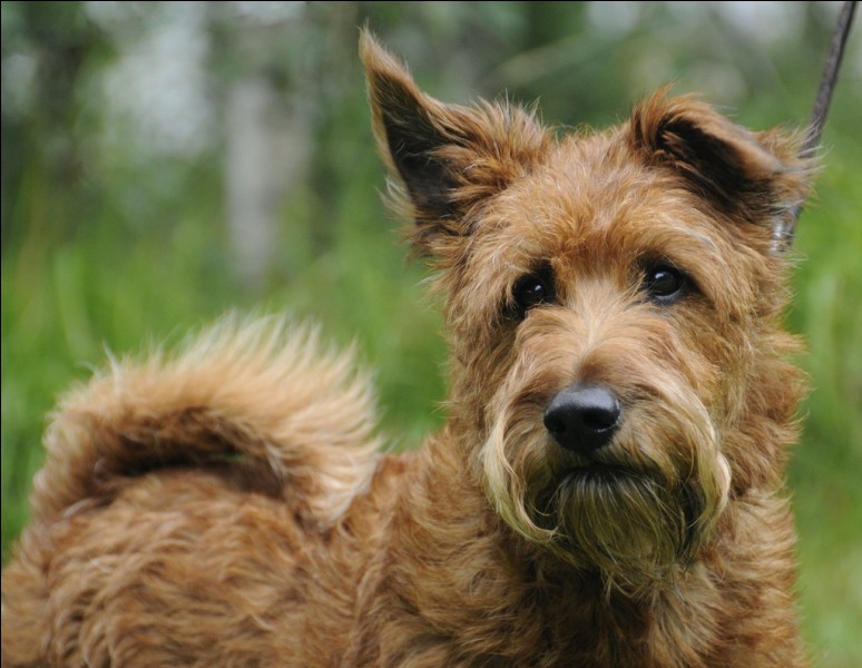 Quel nom porte ce chien ?