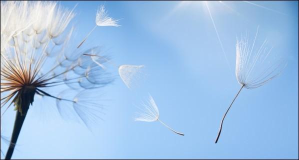D'après le proverbe, que récolte celui qui sème le vent ?
